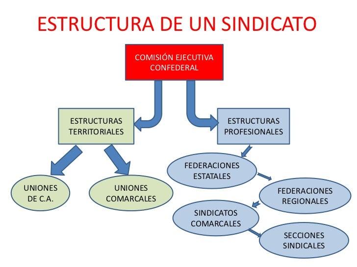 ESTRUCTURA DE UN SINDICATO<br />COMISIÓN EJECUTIVA CONFEDERAL<br />ESTRUCTURASTERRITORIALES<br />ESTRUCTURASPROFESIONALES<...