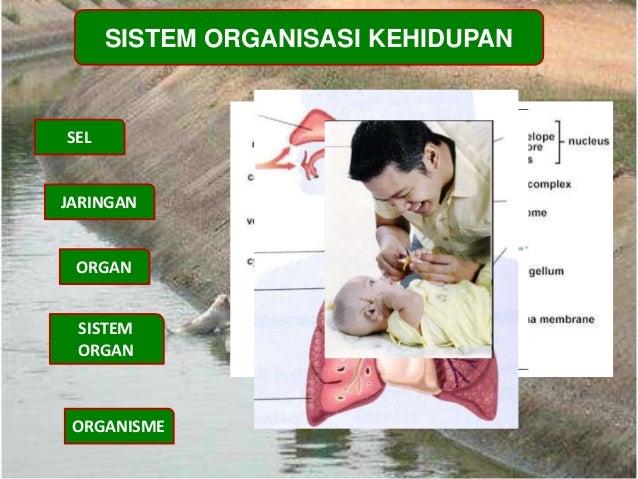 SISTEM ORGANISASI KEHIDUPAN SEL JARINGAN ORGAN ORGANISME SISTEM ORGAN