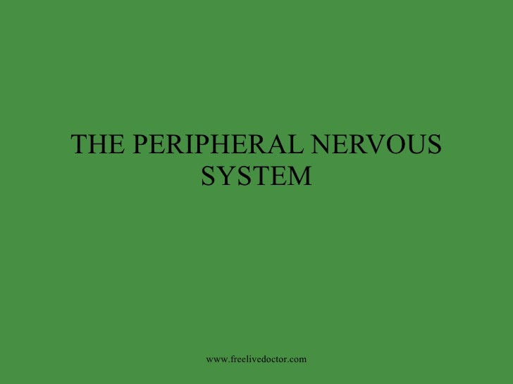 THE PERIPHERAL NERVOUS SYSTEM www.freelivedoctor.com