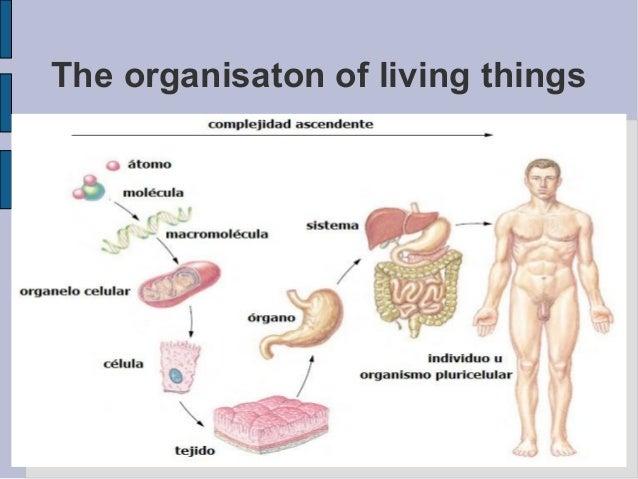 The organisaton of living things