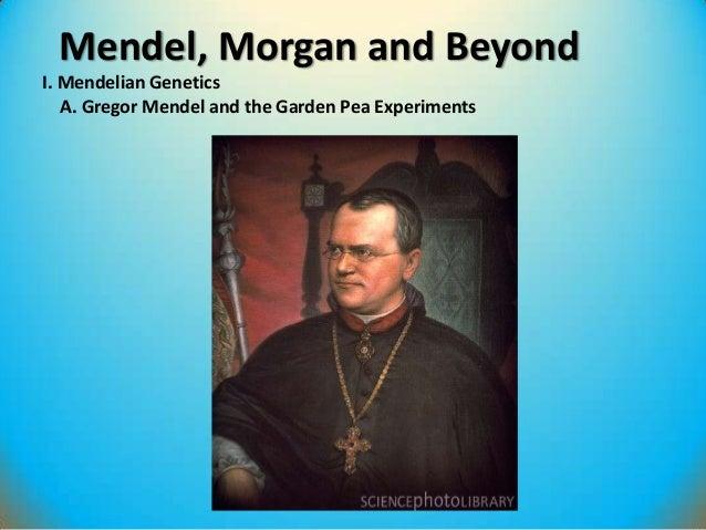 Mendel, Morgan and Beyond I. Mendelian Genetics A. Gregor Mendel and the Garden Pea Experiments