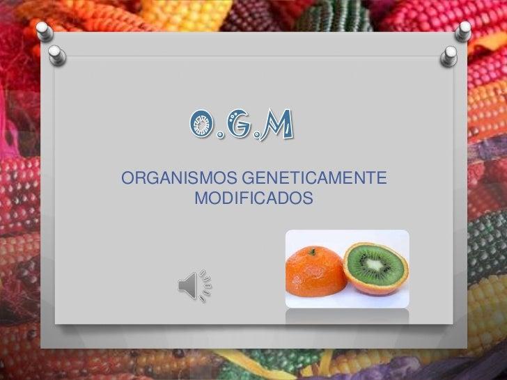 O.G.M<br />ORGANISMOS GENETICAMENTE MODIFICADOS<br />