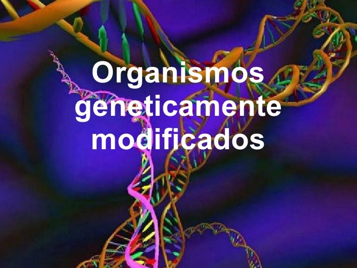 Organismos geneticamente modificados