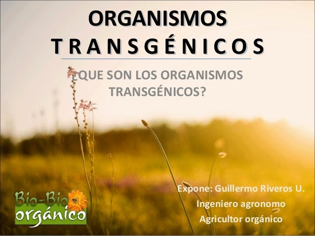 ORGANISMOSORGANISMOS T R A N S G É N I C O ST R A N S G É N I C O S ¿QUE SON LOS ORGANISMOS TRANSGÉNICOS? Expone: Guillerm...