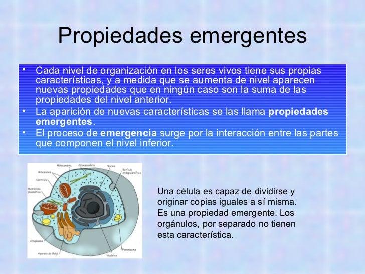 Organismos unicelulares y pluricelulares - Inmobiliaria origen ...