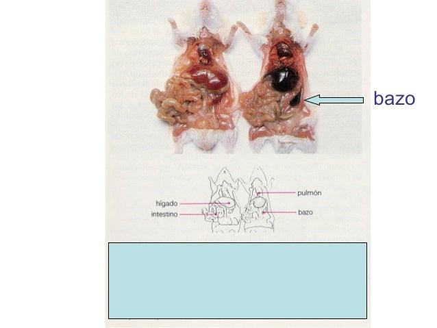 El tratamiento de las lamblias la medicina pública