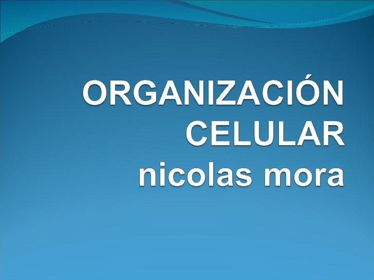Teoría celularPostulados de la teoría celular2. Todos los organismos vivos están compuestos por una o   más células.3. Las...