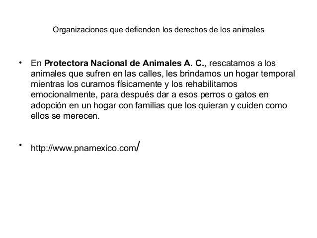 Organizaciones que defienden los derechos de los animales• En Protectora Nacional de Animales A. C., rescatamos a los  ani...