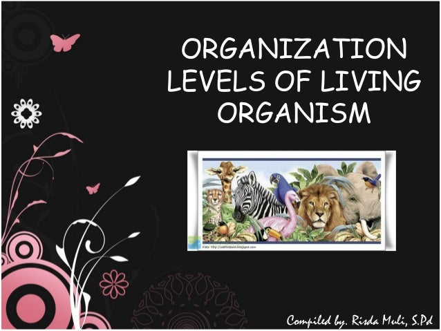 ORGANIZATION LEVELS OF LIVING ORGANISM Compiled by. Risda Muli, S.Pd