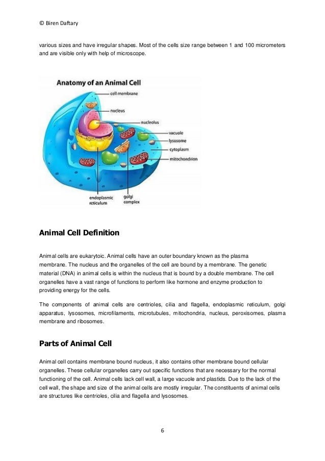 Organization of cells notes