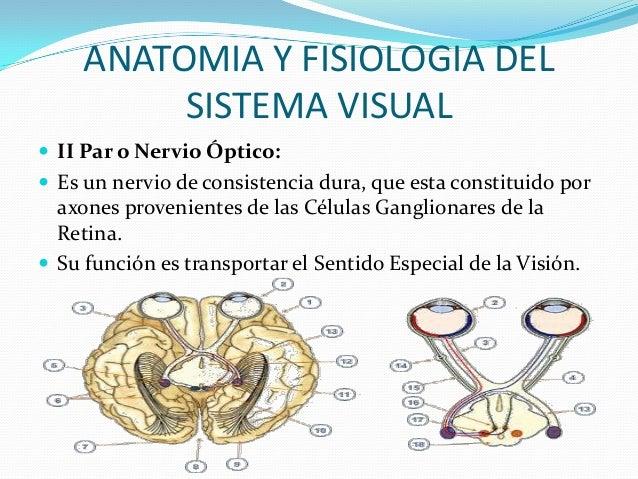 ÓRGANO DE LA VISIÓN Y PERCEPCIÓN DE COLOR (PSICÓLOGOS)