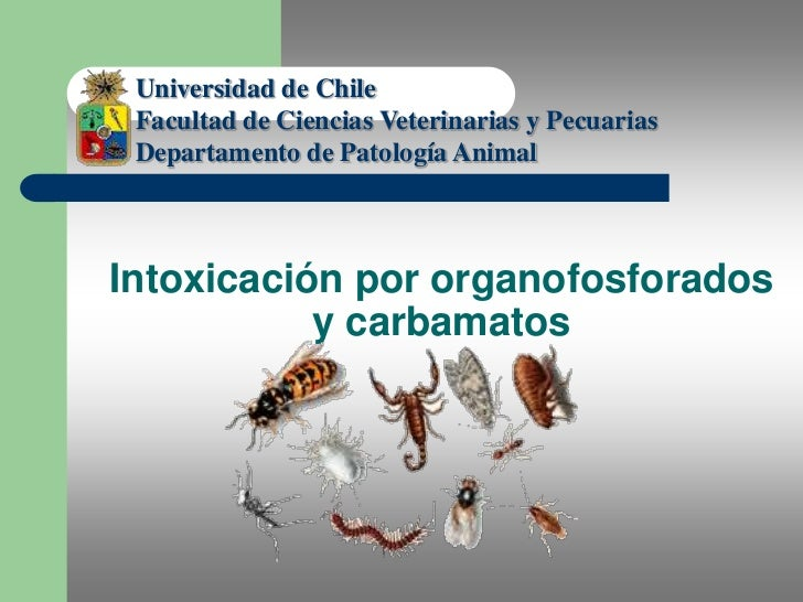 Universidad de Chile<br />Facultad de Ciencias Veterinarias y Pecuarias<br />Departamento de Patología Animal<br />Dr. Jul...