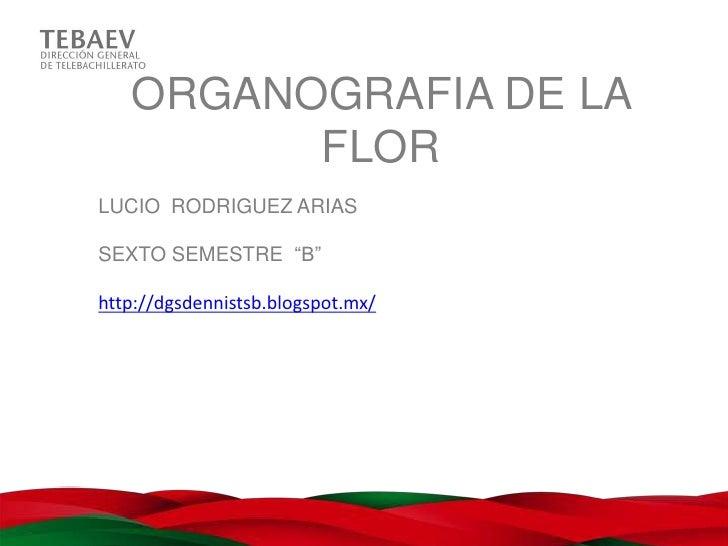 "ORGANOGRAFIA DE LA         FLORLUCIO RODRIGUEZ ARIASSEXTO SEMESTRE ""B""http://dgsdennistsb.blogspot.mx/"