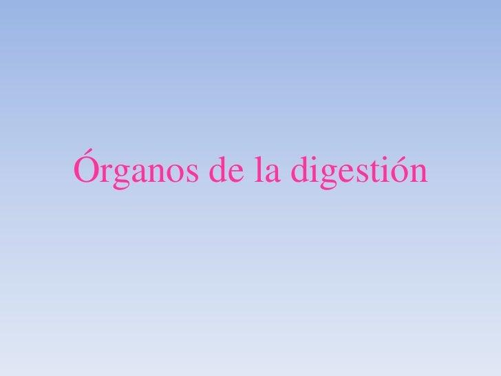 Órganos de la digestión<br />