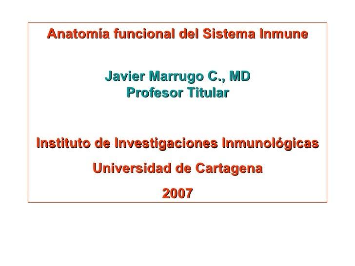 Anatomía funcional del Sistema Inmune Javier Marrugo C., MD Profesor Titular Instituto de Investigaciones Inmunológicas Un...