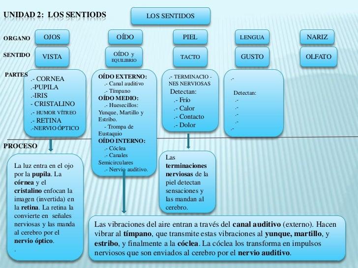 Organos De Los Sentidos Diagram Espa U00f1ol