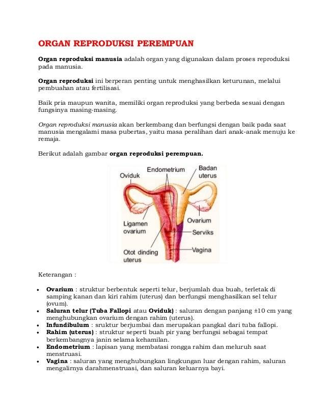 Organ Reproduksi Wanita Dan Oogenesis