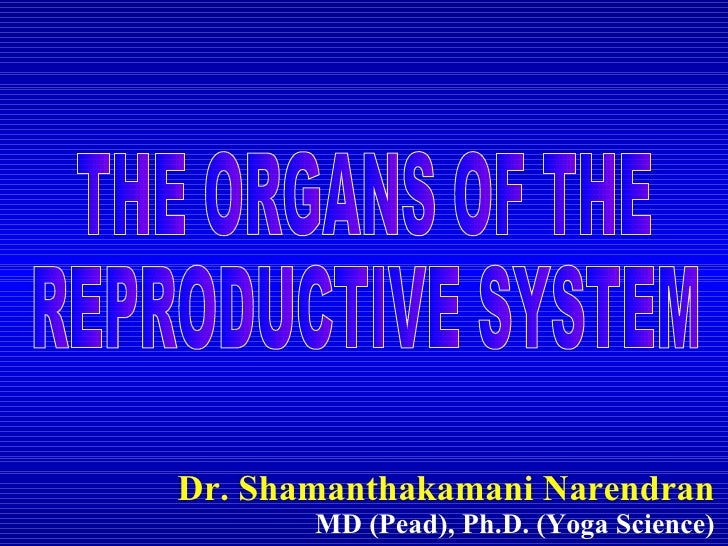 Dr. Shamanthakamani Narendran MD (Pead), Ph.D. (Yoga Science) THE ORGANS OF THE  REPRODUCTIVE SYSTEM