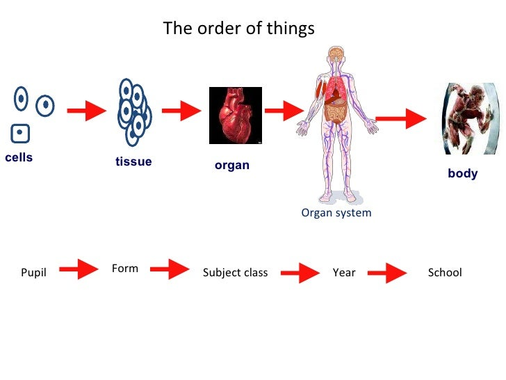 Organs, Tissue and Cells.pot
