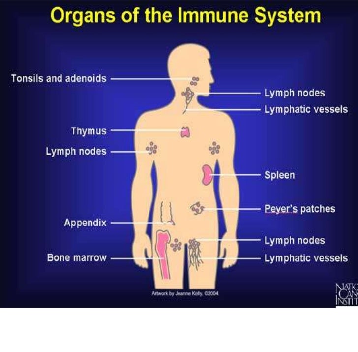 Immunity = All the mechanism the body                 uses to protect the body                      from foreign agents In...