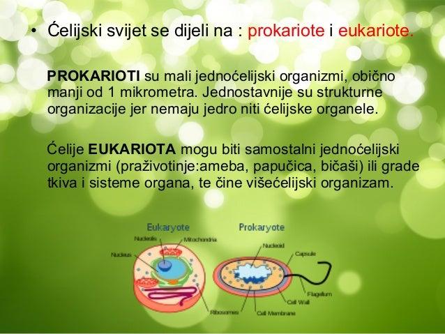 • Ćelijski svijet se dijeli na : prokariote i eukariote.  PROKARIOTI su mali jednoćelijski organizmi, obično  manji od 1 m...