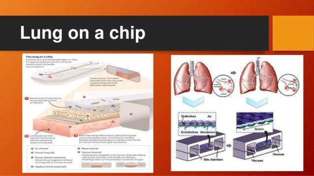 Organs On Chip Ppt