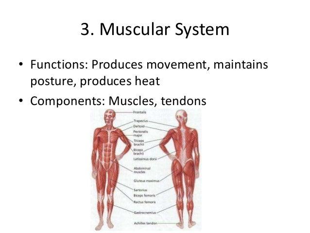 Organ Systems