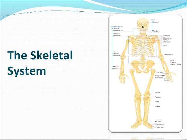 essay on human body parts Free essay: the muscular system is a group of tough tissues that make up the body parts move and help in maintaining posture the main organs are tendons.