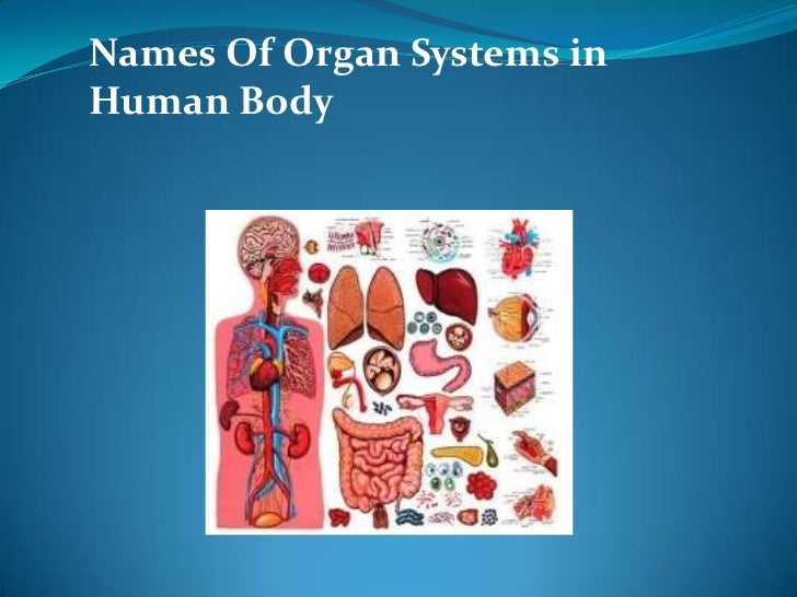Names Of Organ Systems inHuman Body