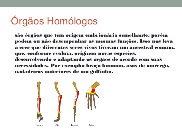 Orgãos Análogos E Homólogos