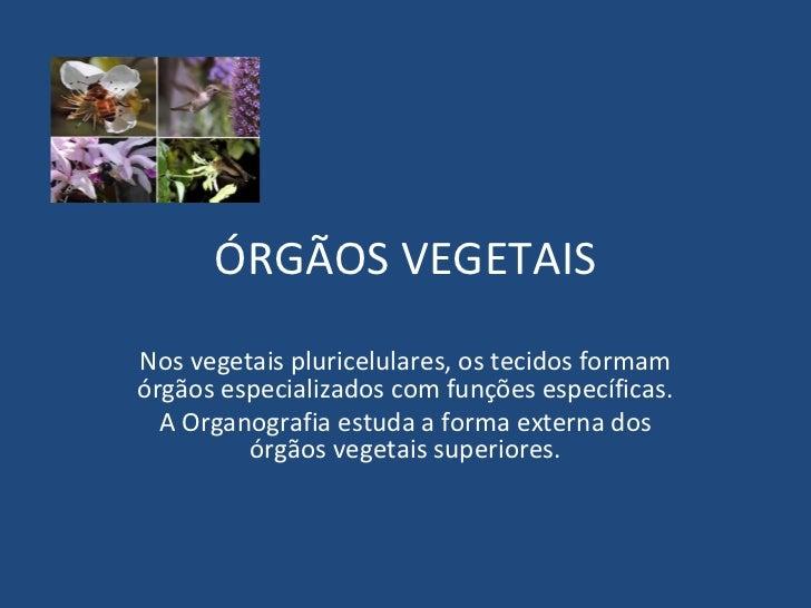 ÓRGÃOS VEGETAISNos vegetais pluricelulares, os tecidos formamórgãos especializados com funções específicas.  A Organografi...