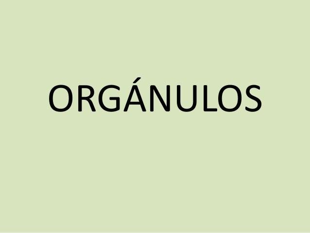 ORGÁNULOS