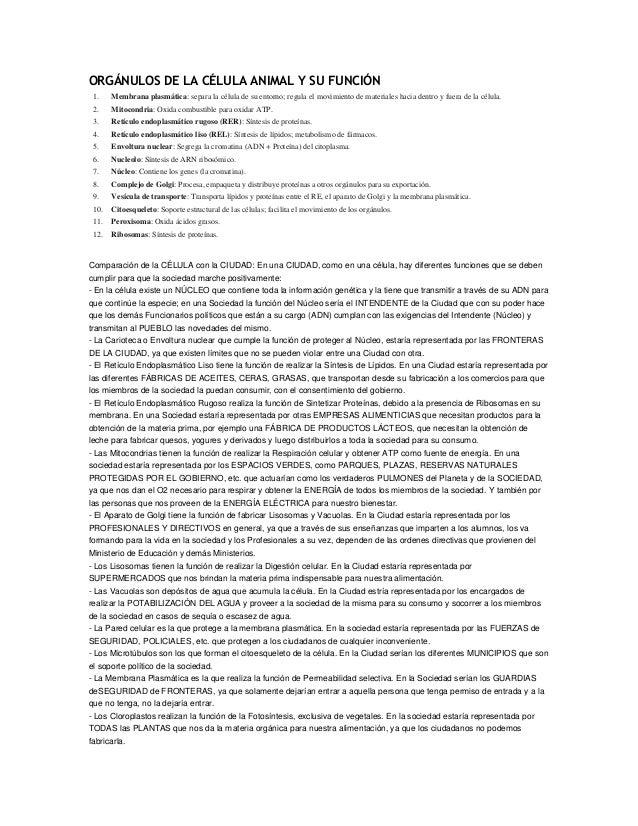 ORGÁNULOS DE LA CÉLULA ANIMAL Y SU FUNCIÓN 1.  Membrana plasmática: separa la célula de su entorno; regula el movimiento d...
