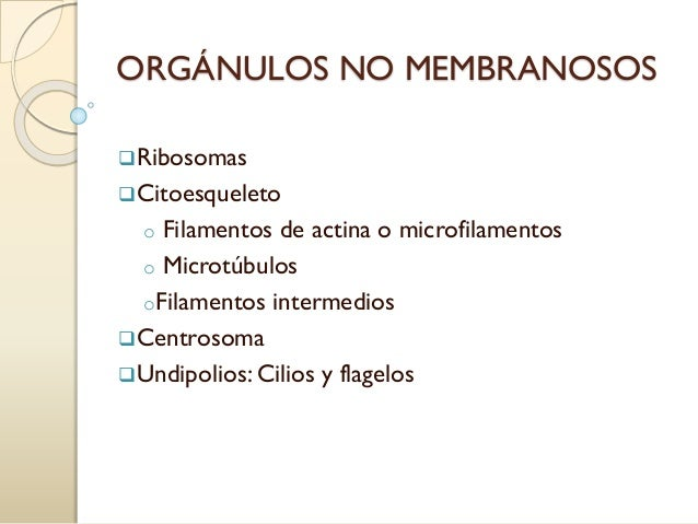 ORGÁNULOS NO MEMBRANOSOS Ribosomas Citoesqueleto o Filamentos de actina o microfilamentos o Microtúbulos oFilamentos int...
