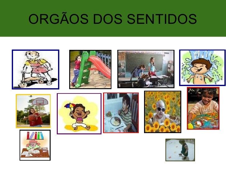 ORGÃOS DOS SENTIDOS