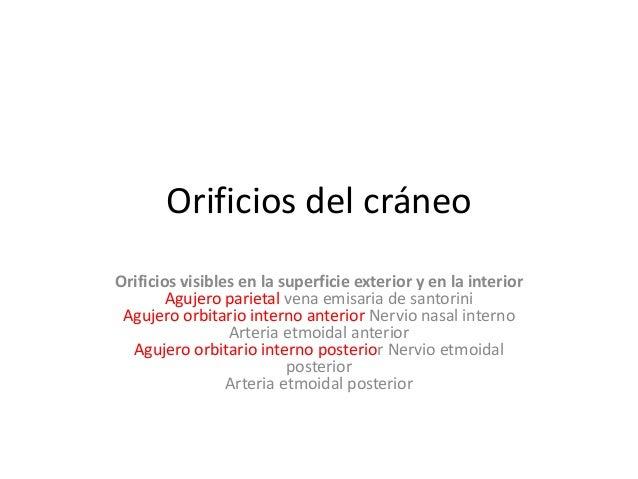 Orificios del cráneo Orificios visibles en la superficie exterior y en la interior Agujero parietal vena emisaria de santo...