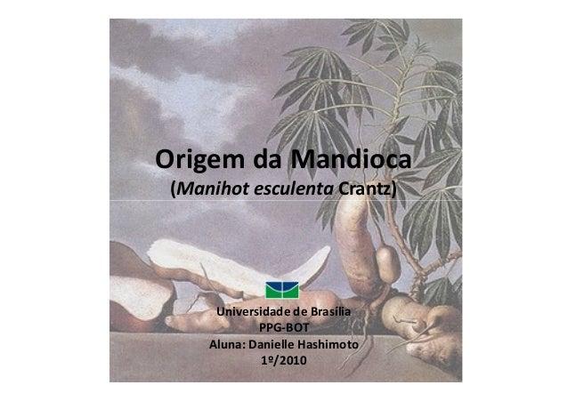 Origem da Mandioca  (Manihot eessccuulleennttaa CCrraannttzz))  Universidade de Brasília  PPG-BOT  Aluna: Danielle Hashimo...