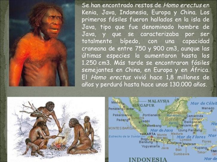 Se han encontrado restos de  Homo erectus  en Kenia, Java, Indonesia, Europa y China. Los primeros fósiles fueron hallados...