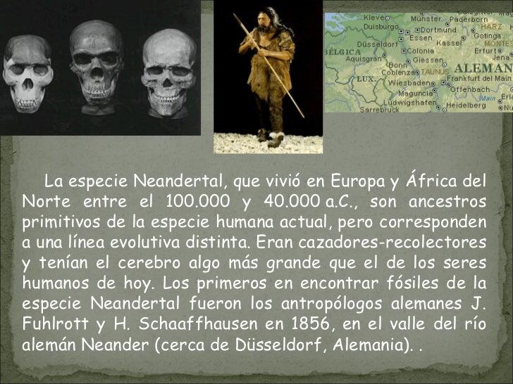 La especie Neandertal, que vivió en Europa y África del Norte entre el 100.000 y 40.000a.C., son ancestros primitivos de ...