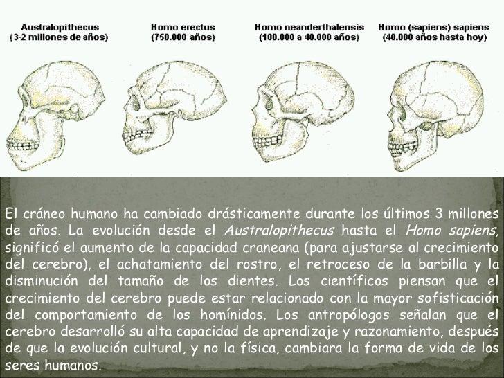 El cráneo humano ha cambiado drásticamente durante los últimos 3 millones de años. La evolución desde el  Australopithecus...