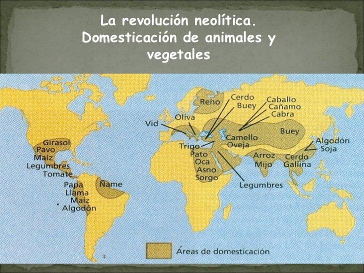 La revolución neolítica. Domesticación de animales y vegetales