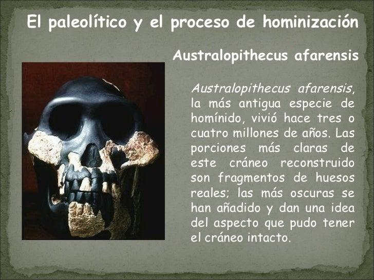 Australopithecus afarensis , la más antigua especie de homínido, vivió hace tres o cuatro millones de años. Las porciones ...