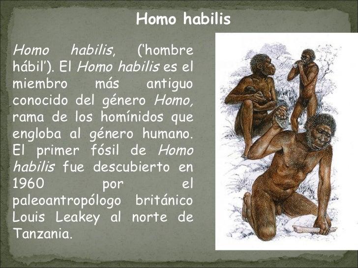 Homo habilis , ('hombre hábil'). El  Homo habilis  es el miembro más antiguo conocido del género  Homo,  rama de los homín...