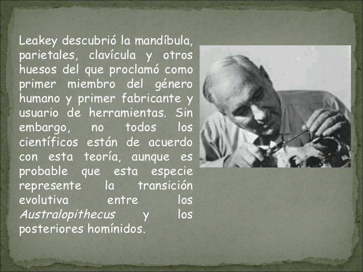 Leakey descubrió la mandíbula, parietales, clavícula y otros huesos del que proclamó como primer miembro del género humano...