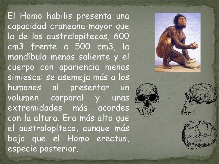 El Homo habilis presenta una capacidad craneana mayor que la de los australopitecos, 600 cm3 frente a 500 cm3, la mandíbul...