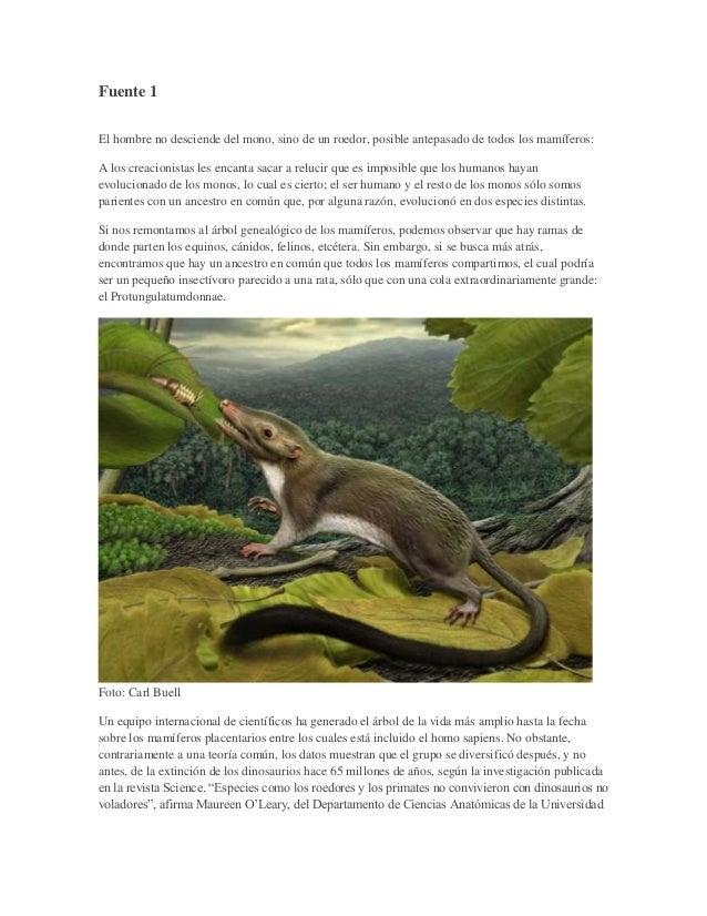 Fuente 1 El hombre no desciende del mono, sino de un roedor, posible antepasado de todos los mamíferos: A los creacionista...