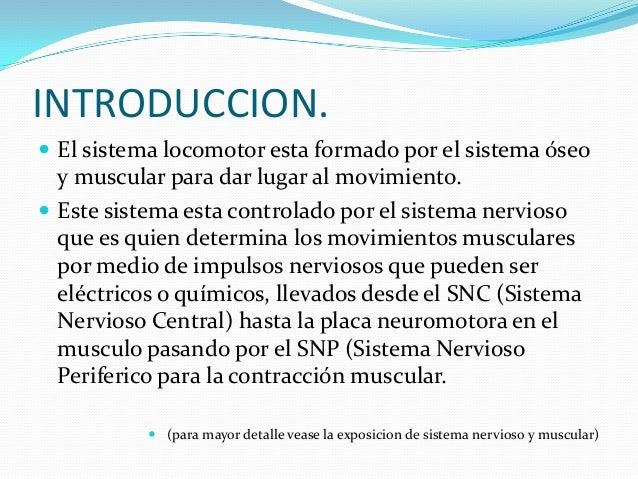 Origen del movimiento muscular y reflejos Slide 2