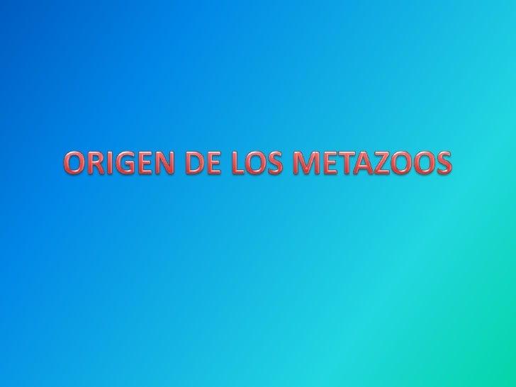 ORIGEN DE LOS METAZOOS<br />