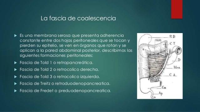Origen Embriologico De Las Fascias Coalescencia 638 Cb Fernandez Javier