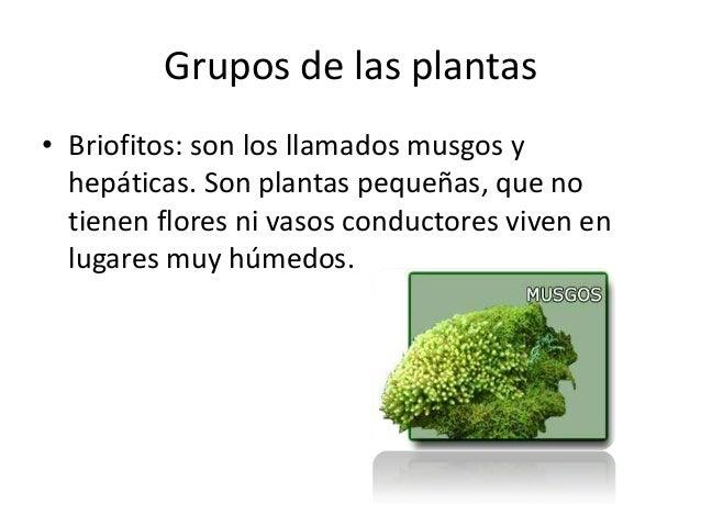 Origen evoluci n de las plantas for Origen de las plantas ornamentales